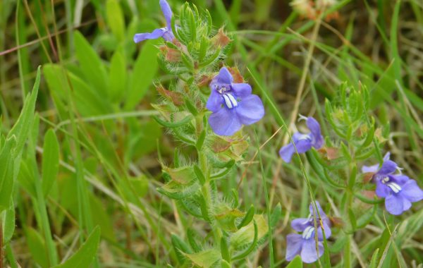 Native Plant Gardens at Southwest Regional Library