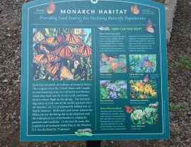 Monarch Way Station at Forest Park Pool