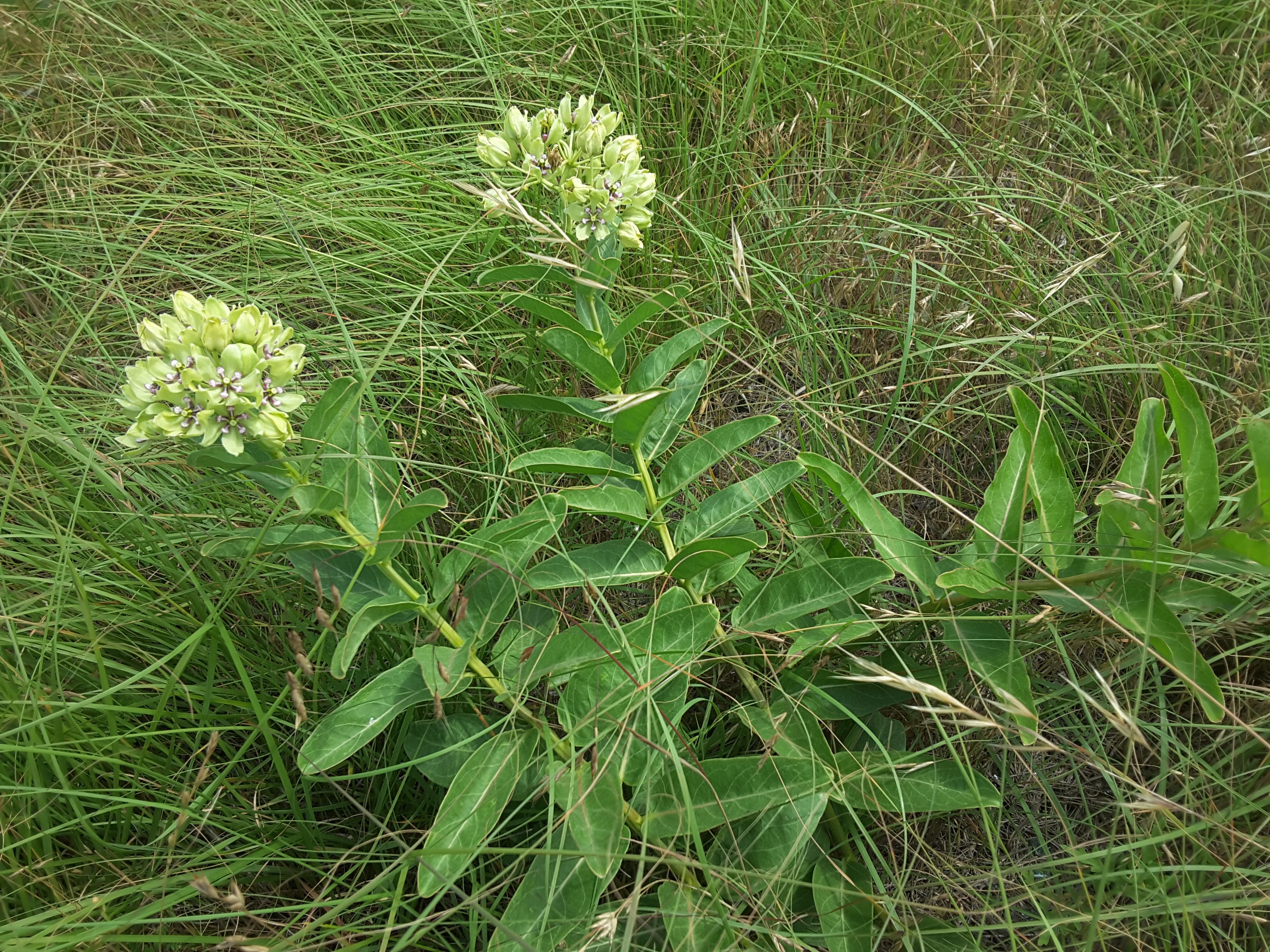 Working with TXDOT to Preserve Native Plant Habitat Along